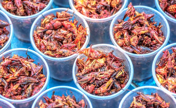 fried grasshoppers in a cup