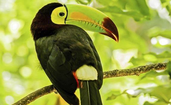 a toucan in the jungle