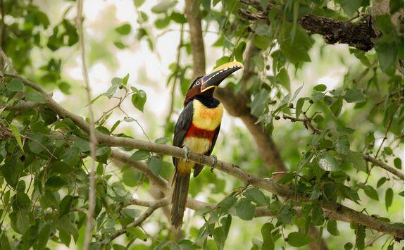 Bird in Pantanal