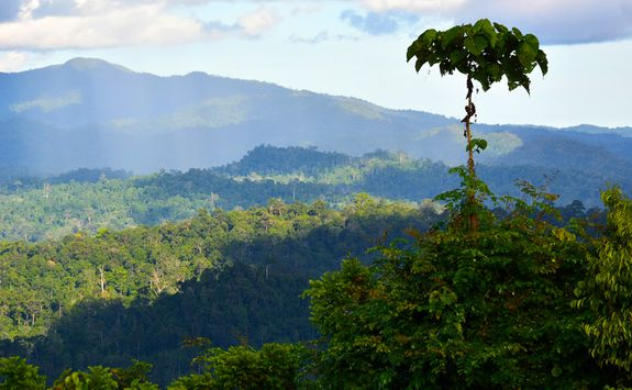 View of the Danum Valley