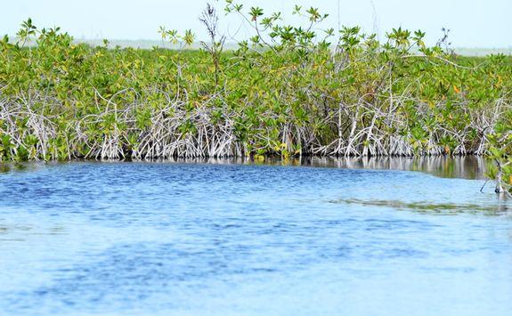 sian kaan's mangroves