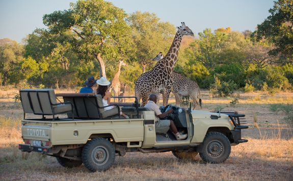 Game drive with giraffe