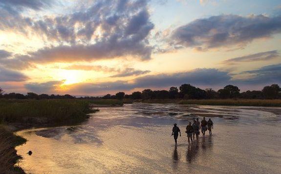 Walking safari at sunset