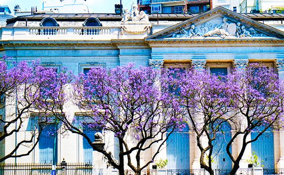 Blossom in Argentina