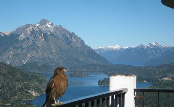 bird with mountains in the background