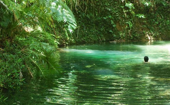 Swimming in Daintree National Park