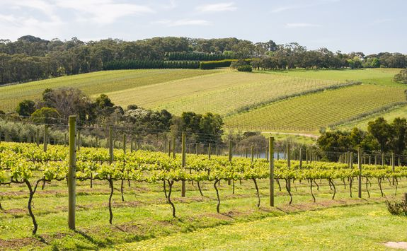 Vineyard in Victoria