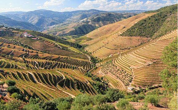 Vineyards in Douro Valleys
