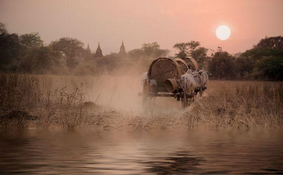 Oxen cart in Bagan