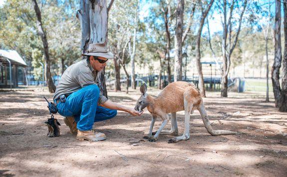 Feeding a Kangaroo