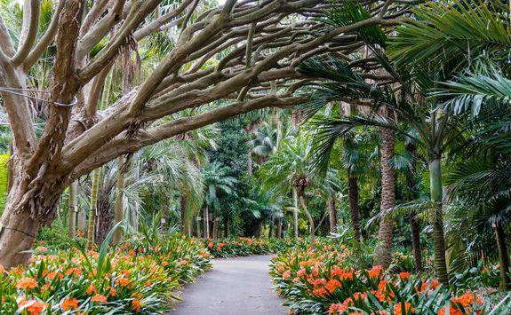 sydney-botanical-gardens