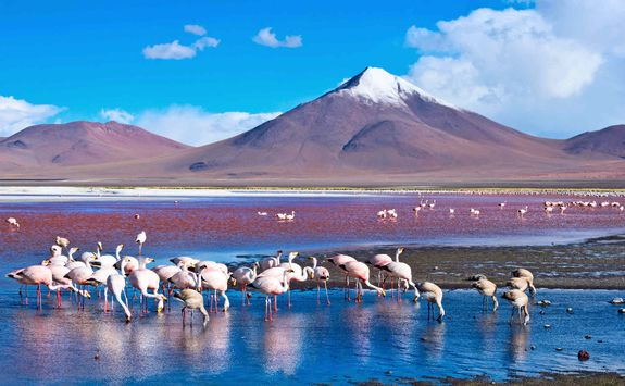 Flamingos in the Atacama Desert