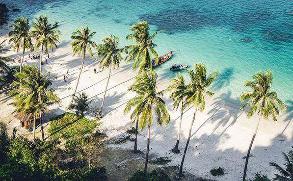 Koh Samu beach palms