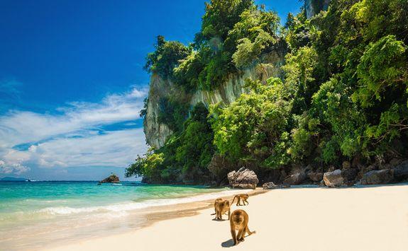 Monkeys on the beach