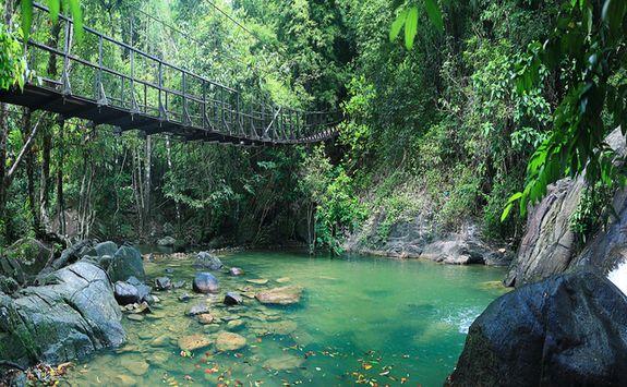 the jungle in Kao Sok