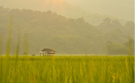 Small hut in Chiang Rai