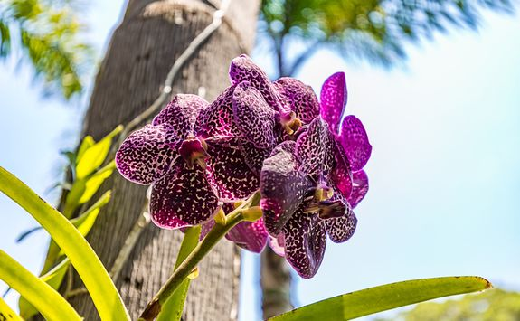 Brumadinho Flower