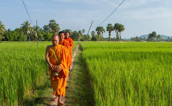 monks in a ricefield