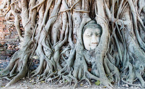 Ayutthaya buddah face
