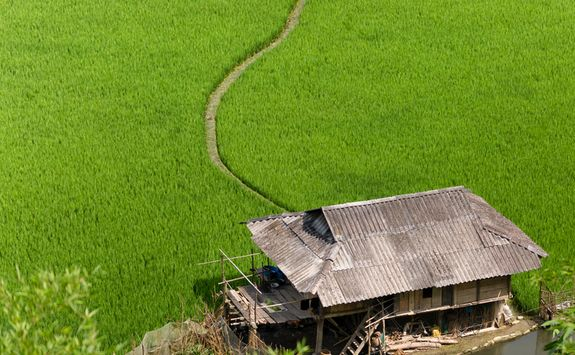 rice paddy field