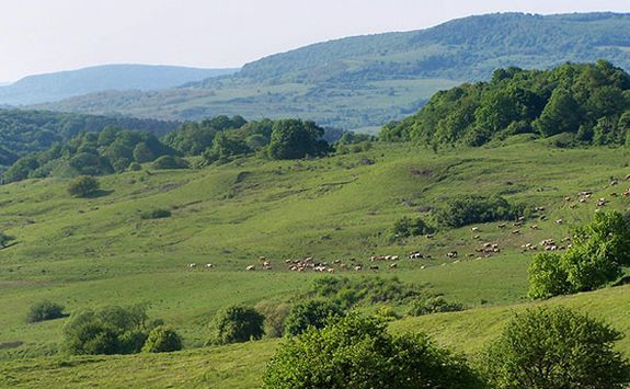fields and sheep