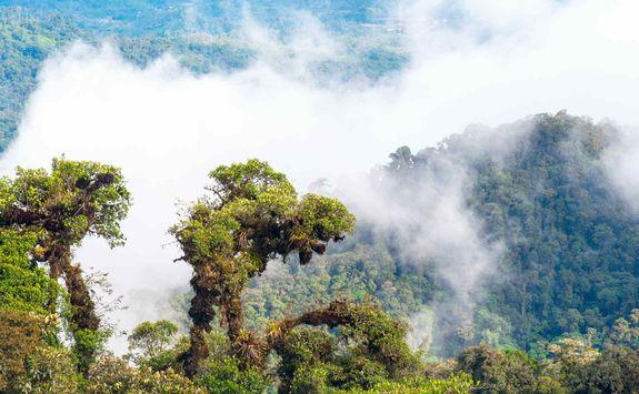 Amazon rainforest in Ecuador