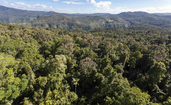 Ecuador jungle canopy