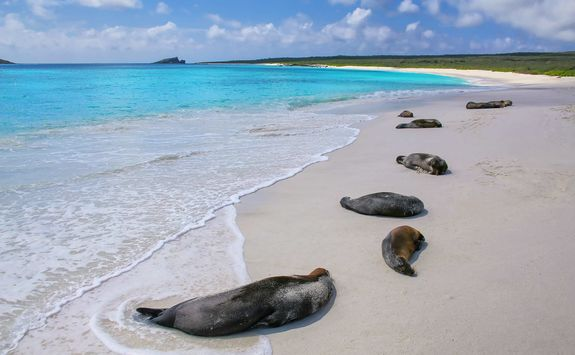 Sea lion on the beach, Galapagos