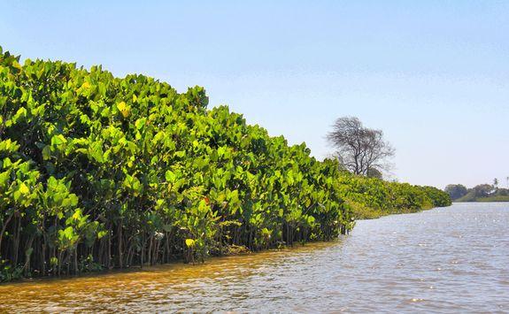 Parnaiba Delta