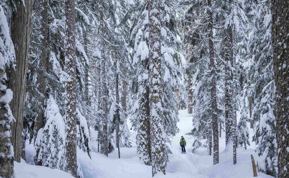 Snowshoeing through the forset