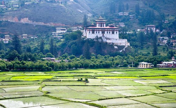 Rice paddy, Paro Dzong
