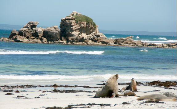 Seal Bay, Australia