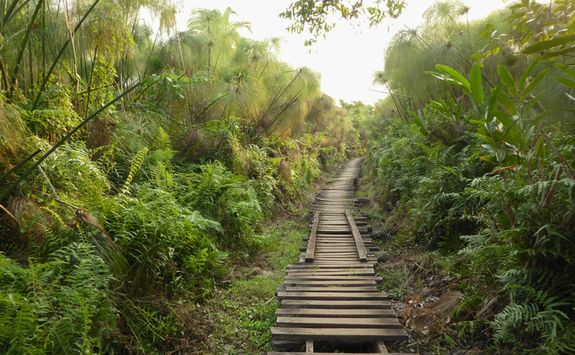 Path to Bigodi Swamp