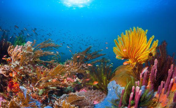 Reef underwater
