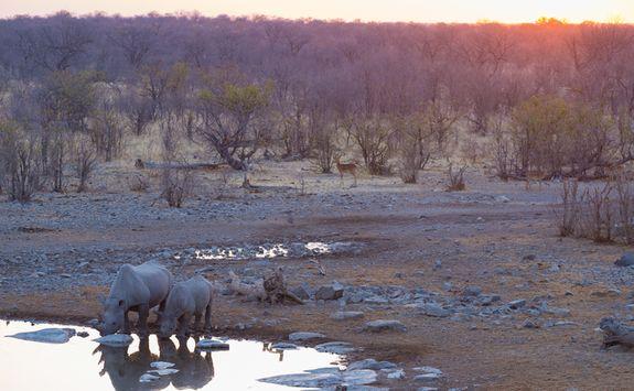 Sunset and rhino