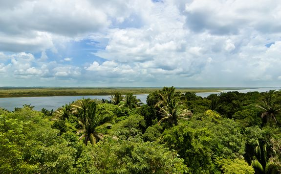 belize jungle river