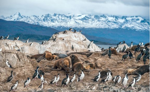 Wildlife in Beagle Channel