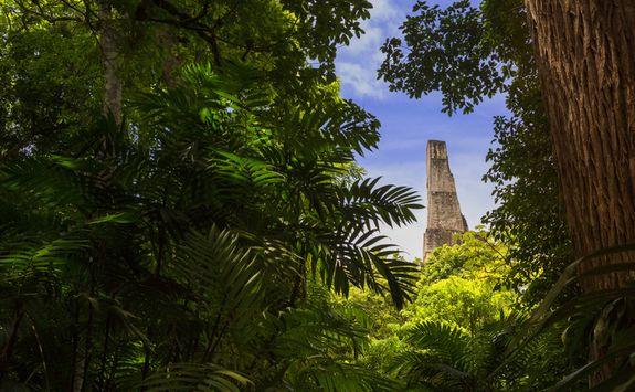 Tikal through the trees