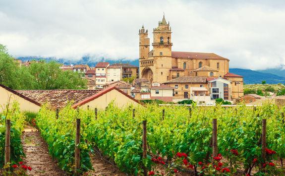 Vineyard in Rioja