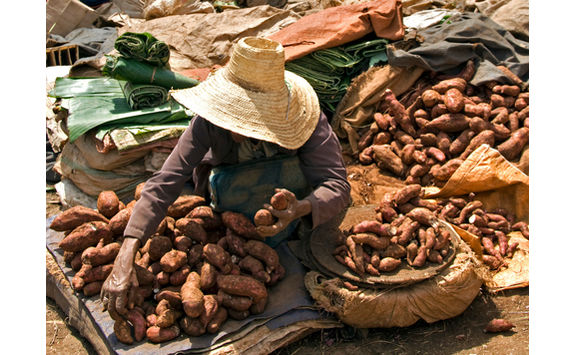Selling sweet potatoes