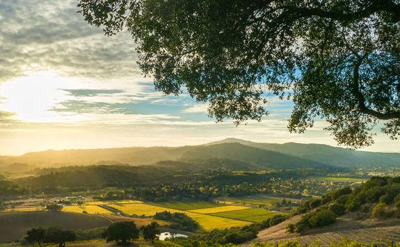 Sonoma Valley vineyard