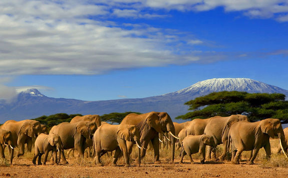 Elephants in Kenya