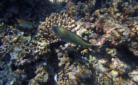 Fish in the Seychelles