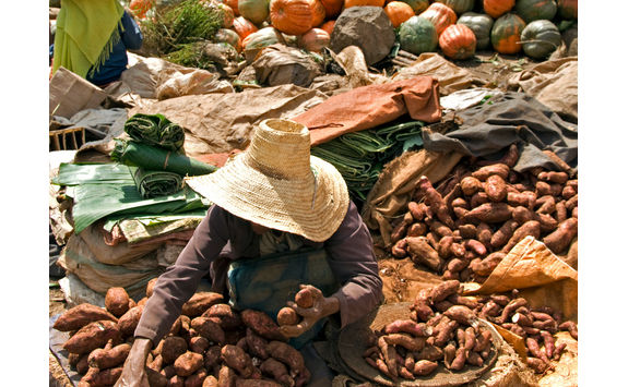 selling sweet potato