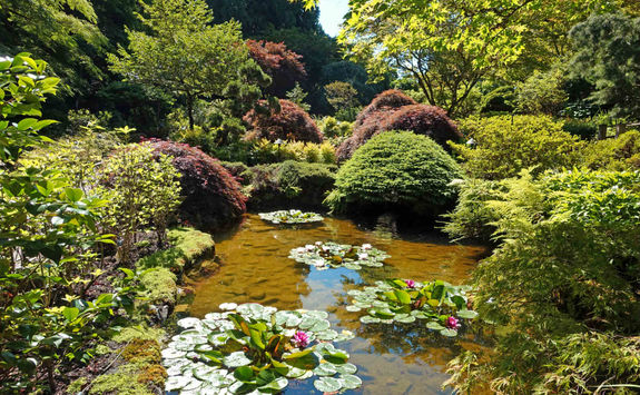 Pond in Butchart Gardens