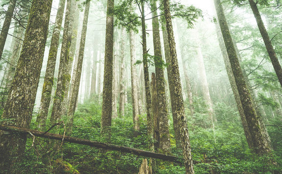 Forest of trees, Pacific Rim National Park Reserve
