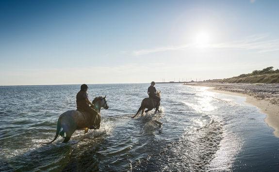 Horses water