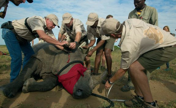 Rhino release