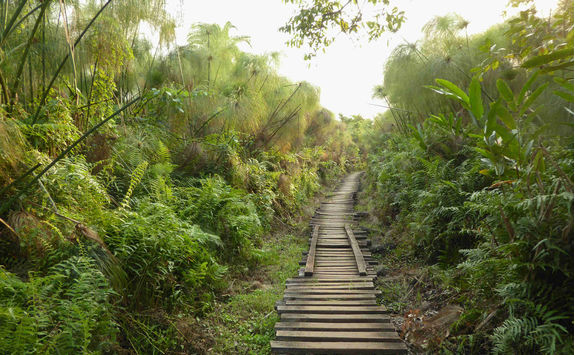 Bigodi wetlands sanctuary