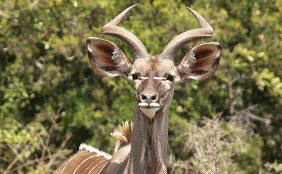 Kudu Port Elizabeth